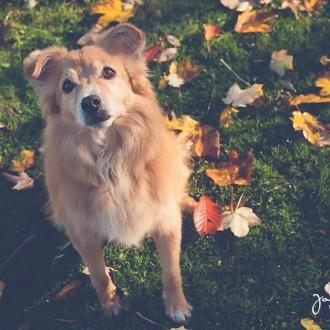 Tiere helfen Tiere – Fotoshooting mit Murphy, Willy und Lalah