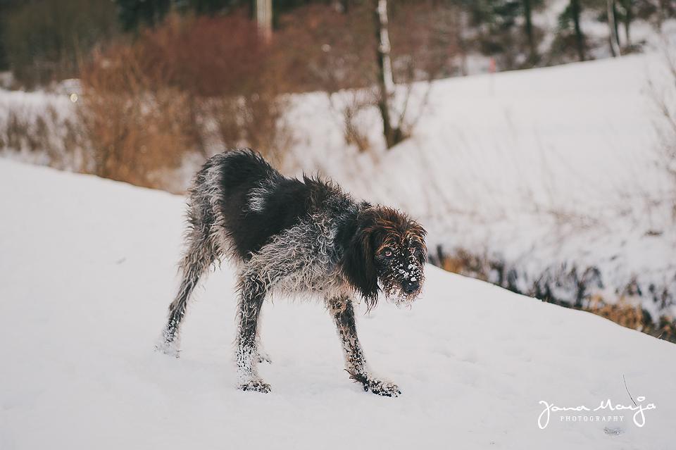 Tiere helfen Tiere – Fotoshooting Zappo