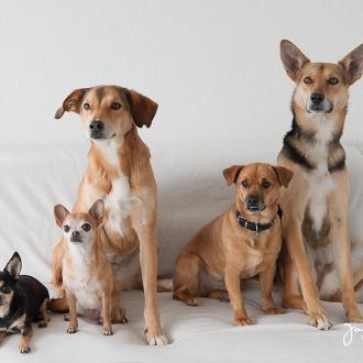 Tiere helfen Tiere – Fotoshooting mit Amy, Cherry, Foxi, Miley und Nora
