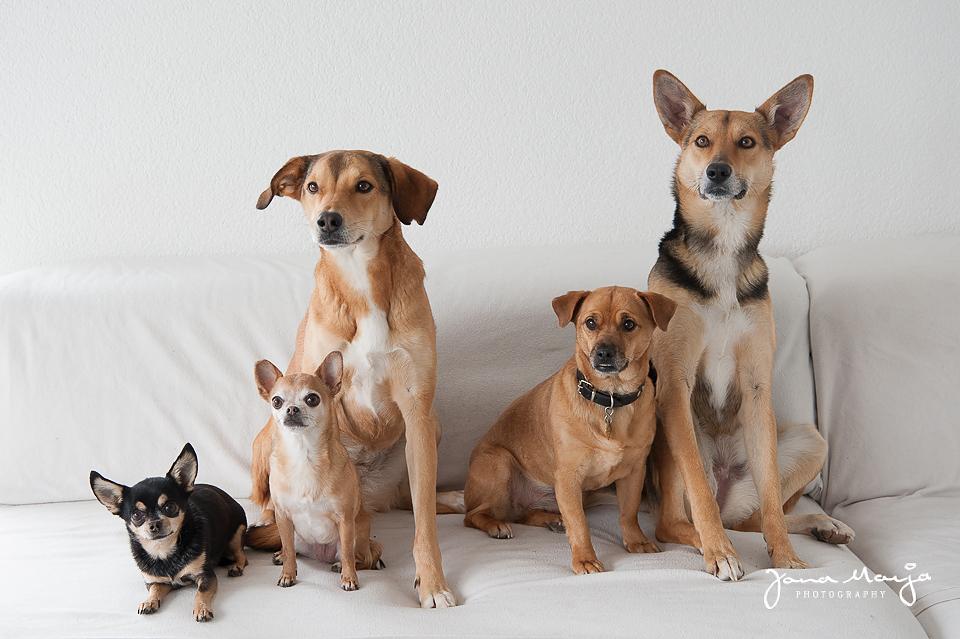 Tiere helfen Tiere - Tierfotografie