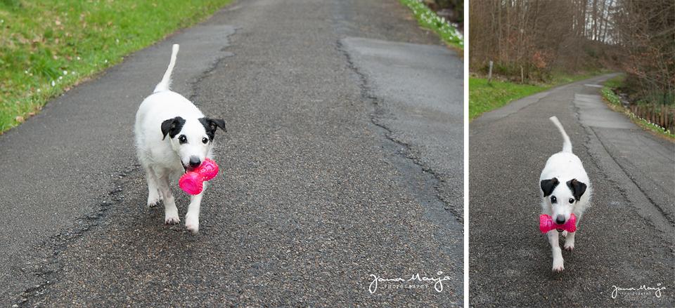 Tiere helfen Tiere - Tierfotografieierfotografie