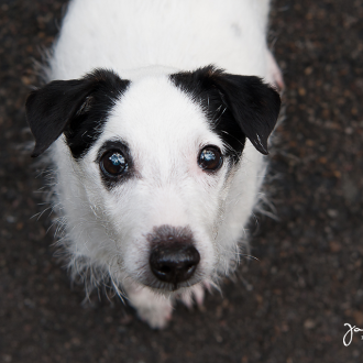 Tiere helfen Tiere – Fotoshooting mit Vlekki